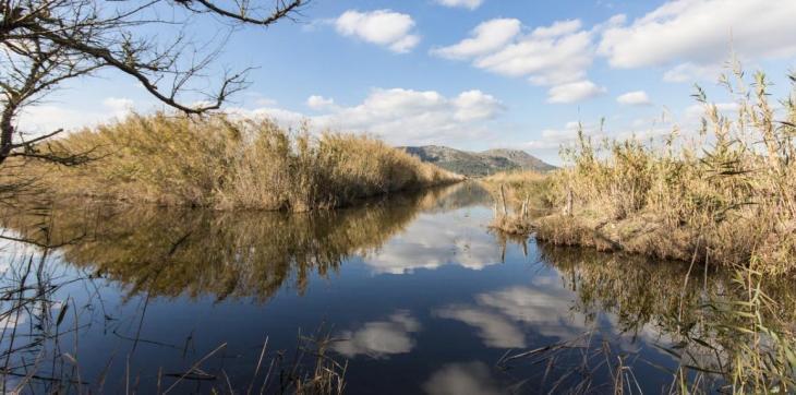 La salinització de les aigües de l'Albufera perjudica el 'volantí espigat', segons la UIB