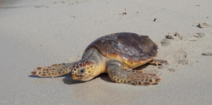 Alliberen tres tortugues que foren rescatades i i s'han recuperat