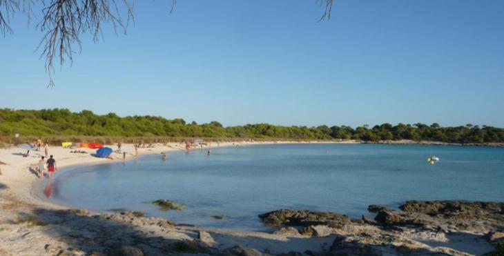 El PP demana al Consell de Menorca que retiri «urgentment» la posidònia de les platges