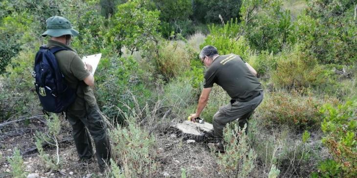 Medi ambient alerta sobre la tala de pins a una finca de la Serra