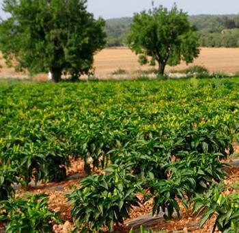 Entitats de pagesos demanen que la nova PAC fomenti l'agroecologia i reconegui la insularitat