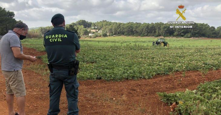 Reforcen el control a les finques agrícoles per tal de frenar el robatori de garroves
