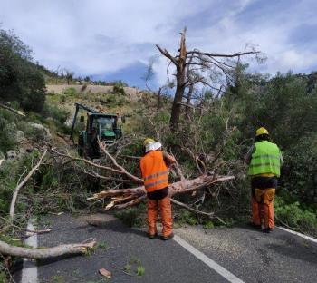 [VÍDEO] Banyalbufar estudia demanar la declaració de zona catastròfica davant el «desastre» ocasionat pel 'cap de fibló'