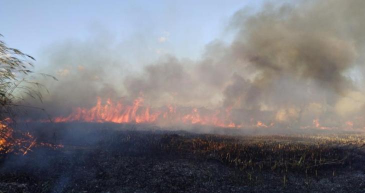 Sucesos.- Declarado un incendio en la Albufera de Alcúdia