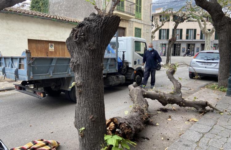Un camió envesteix un arbre al carrer de la Gran Via i el toma