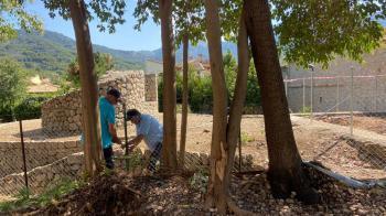 Llestes les actuacions al jardí de Sa Calatrava